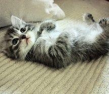 aww, baby, beautiful, cat, cute (Full Size)