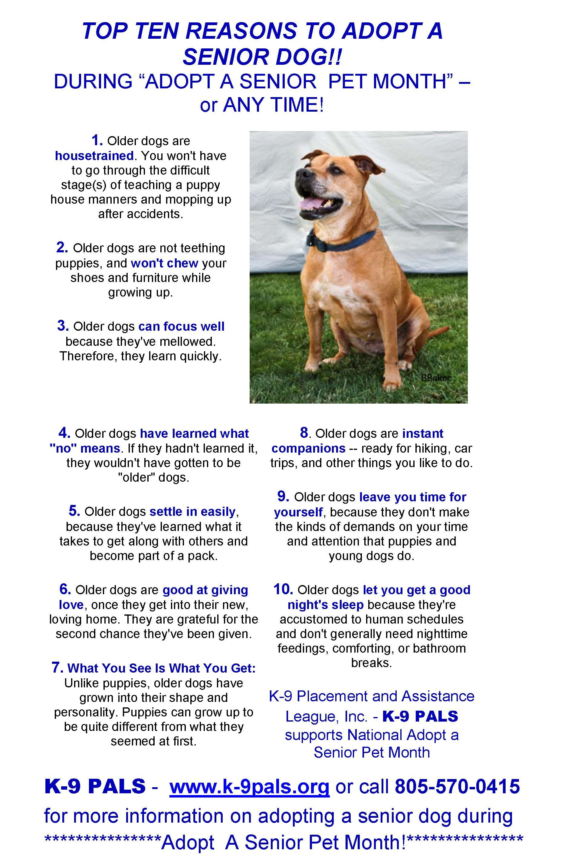 Top Ten Reasons To Adopt A Senior Dog Like Dogs Be Sure To Visit
