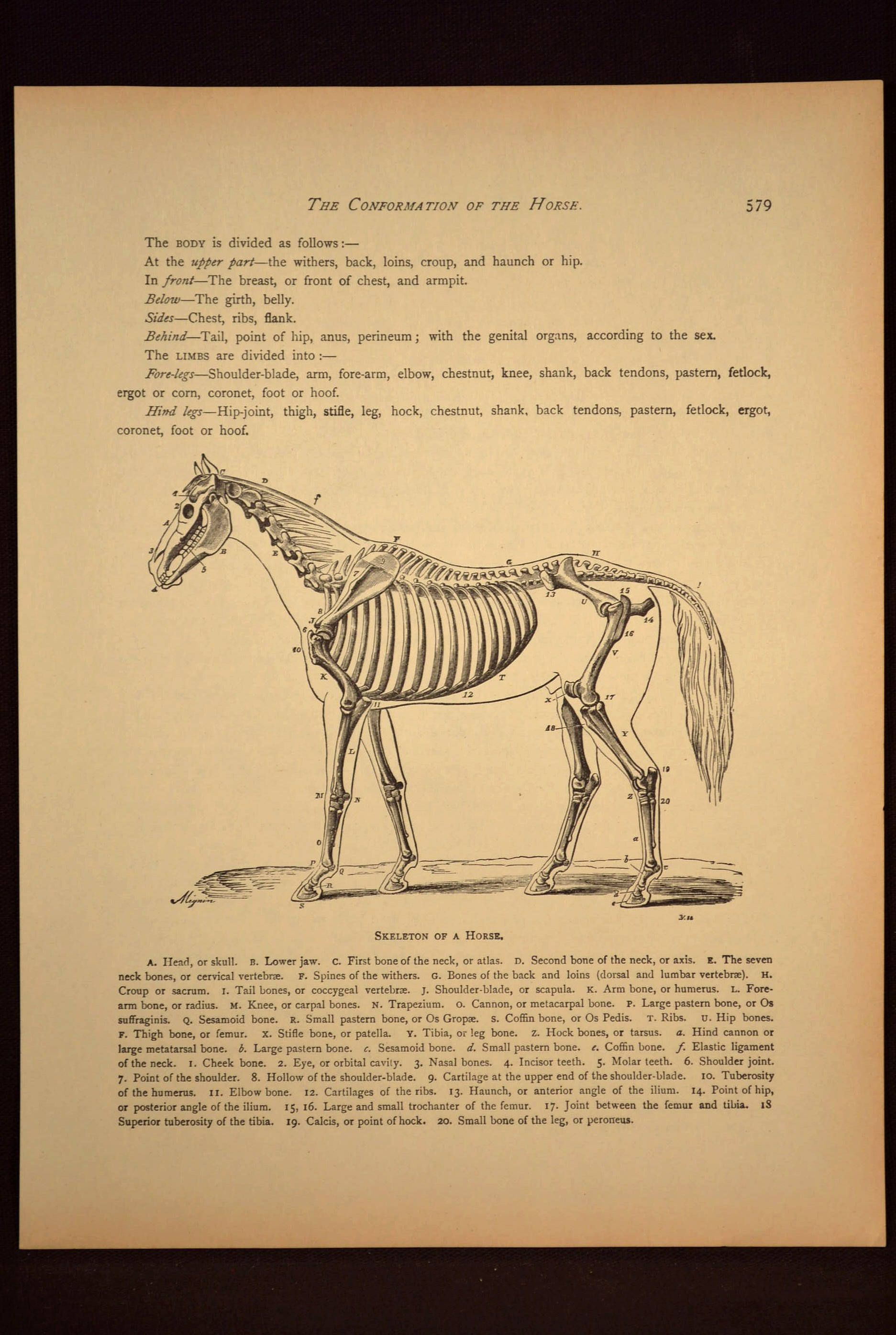 Horse Wall Art Horse Print Horse Wall Decor Book Page Skeleton ...