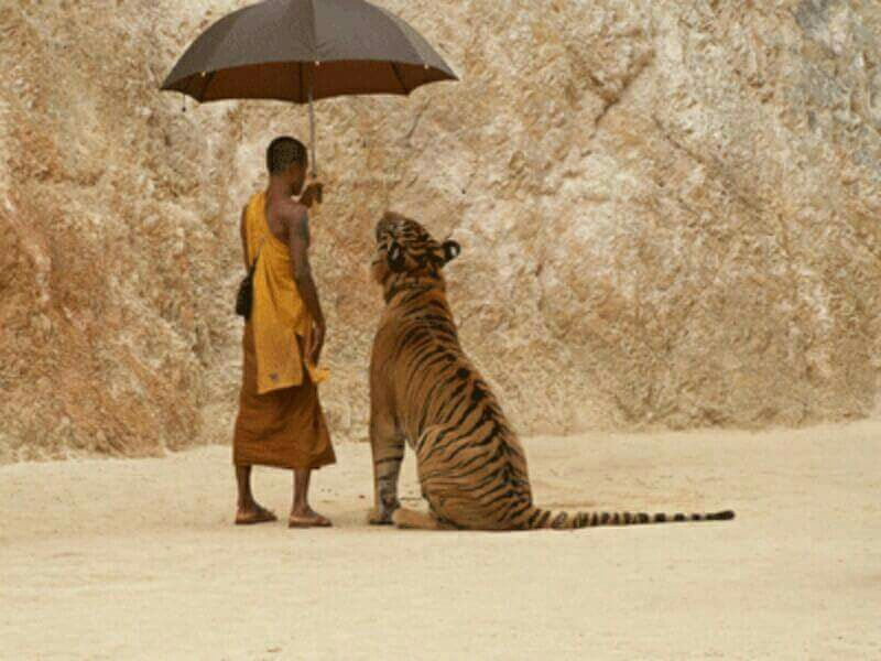 """""""Compassion is the best healer."""" ― Thubten Zopa Rinpoche"""