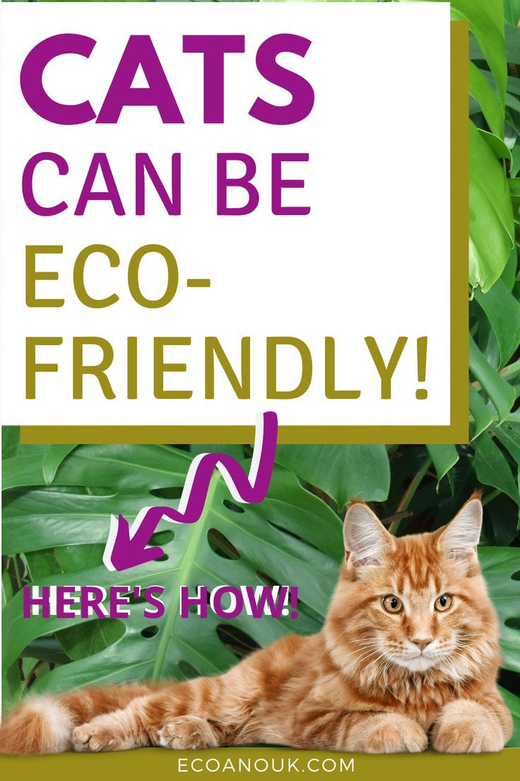 The Complete Guide to Sustainable Cat Care in 2020 Cat