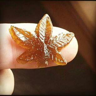 Hash weed leaf