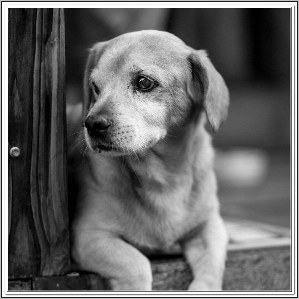 Great Ideas About Dogs Easiest Dogs To Train Dog Training