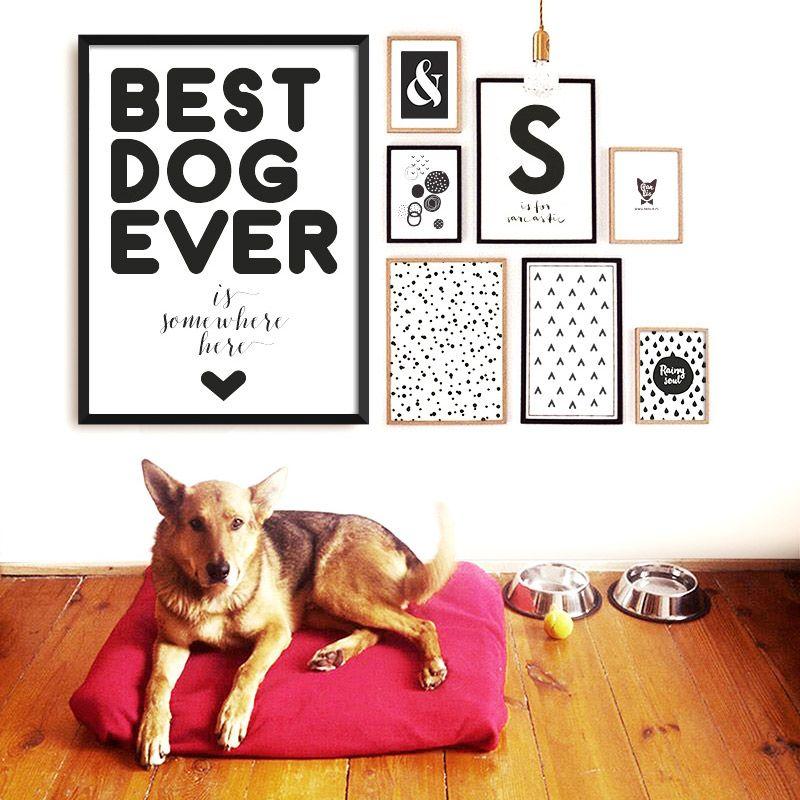 Plakat Dla Właścicieli Psów Best Dog Ever Room Ideas