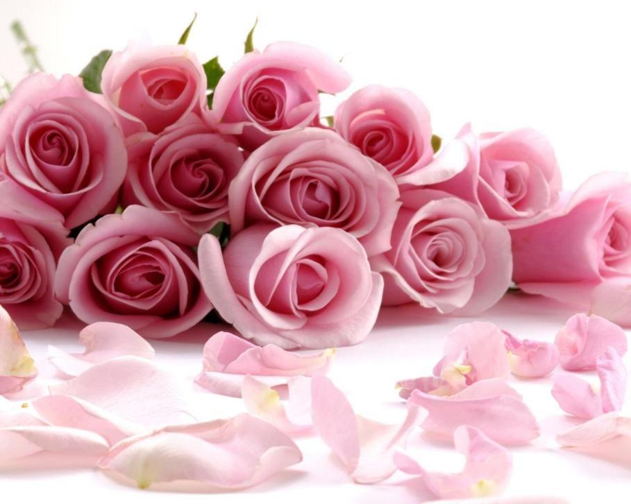 Gambar Bunga Mawar Pink Dalam Tumpukan Flowers Pinterest Flowers