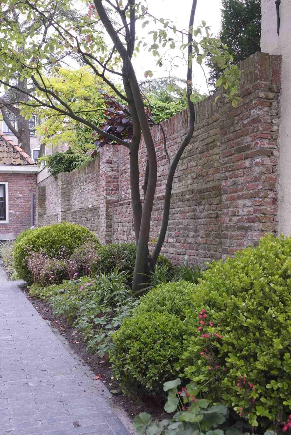 Stadstuin alkmaar tuin pinterest for Landelijke stadstuin