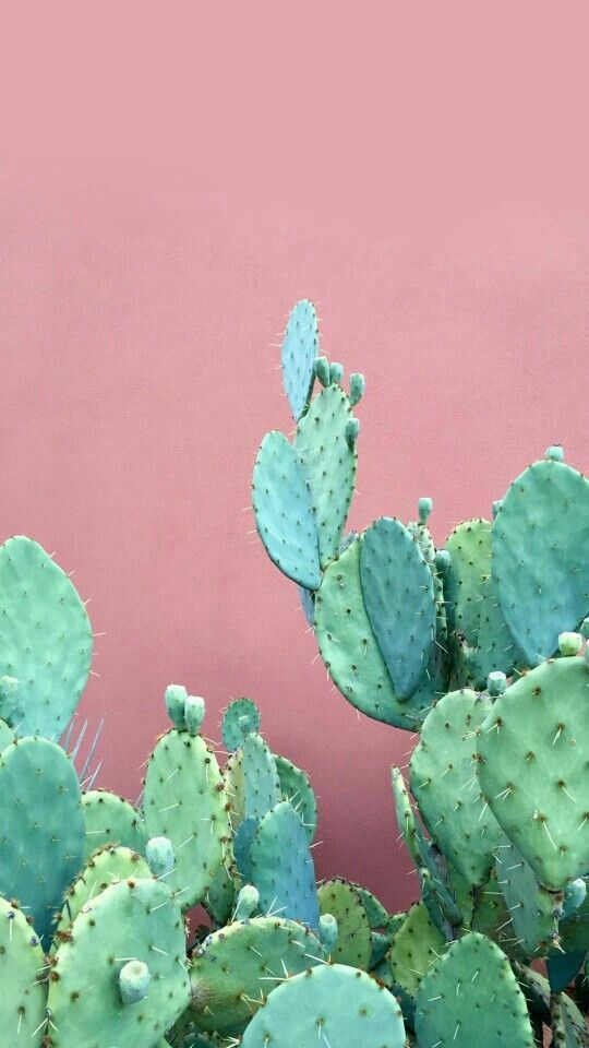 Cactus Love My Multitudes Patterns Wallpaper Iphone