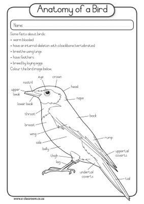 CAPS GradeR Lifeskills Term4 Birds Anatomy Of A Bird