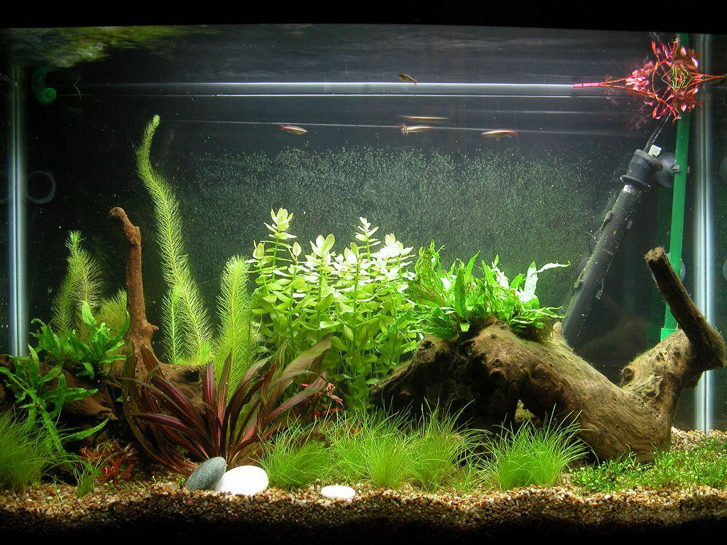 Fish Tank Decoration Ideas Cheap Lighting Aquarium Fish Tank