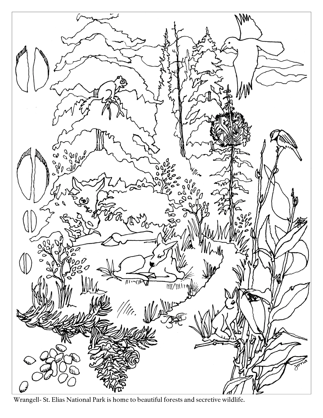 Coloring Pages Forest Scene