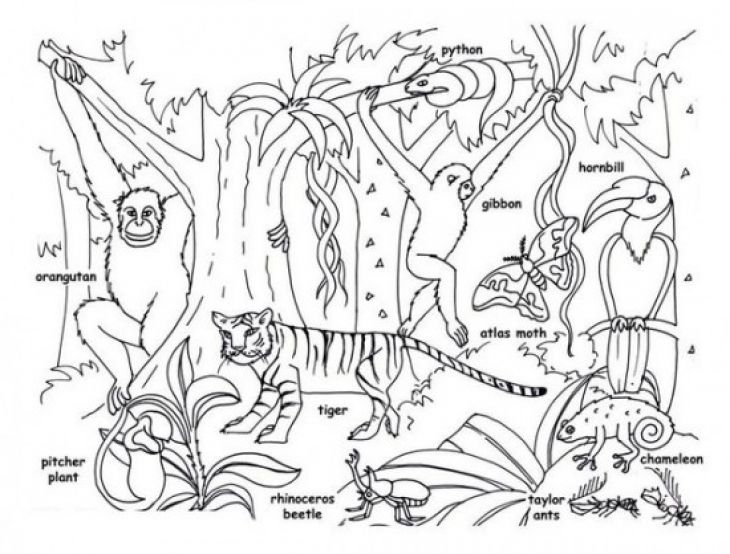 Tropical Jungle And Rainforest Animals Coloring Page Kids