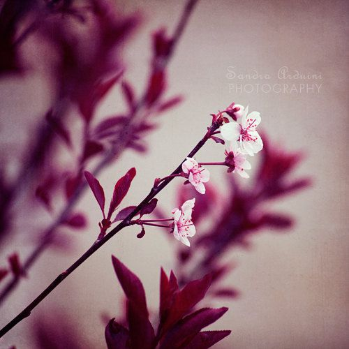 flower photo white deep red- Contemplation fine art photograph 8x8 photo print $25.00