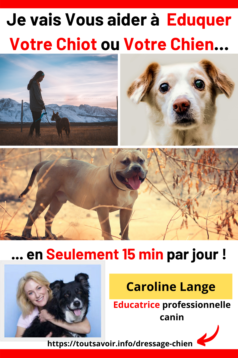 Epingle Sur Education Dressage Chien Guide Pratique