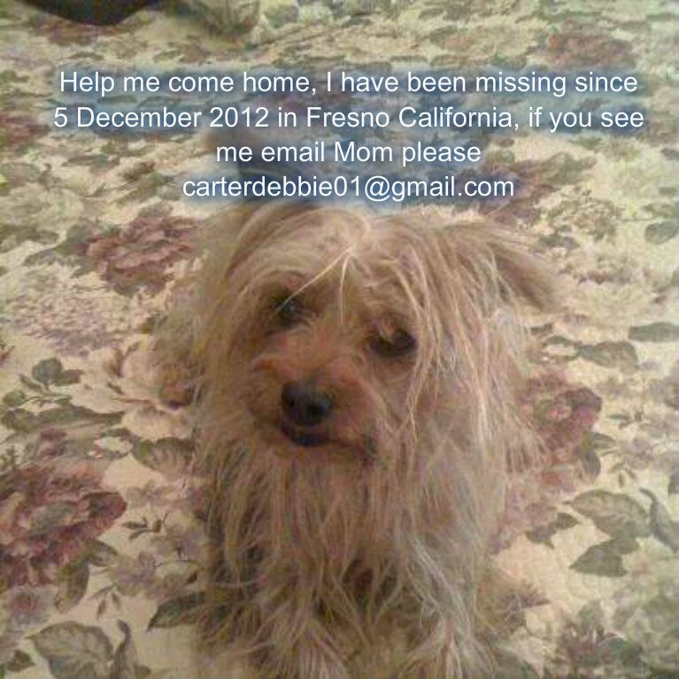 Apartments Near Me Pets: Please Share : Daphney Is A Social Security Therapy Dog