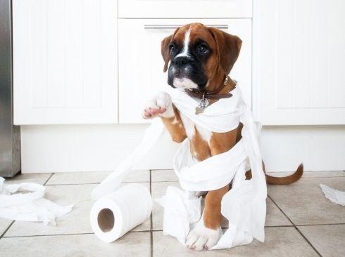 Coprofagia Em Cães: Meu Cachorro Come Cocô - Blog Lói Cúrcio