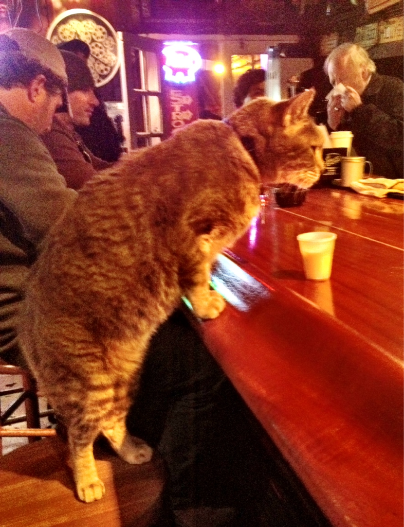 """""""Before the Krewe du Vieux parade, I saw a cat enter a bar (Molly's), plop itself up on a barstool and get served a drink. And that wasn't even the strangest thing I saw last night."""""""