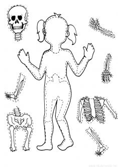 Iskelet Kalibi Boyama Sayfalari Anaokulu Temalari Ve Faaliyetler