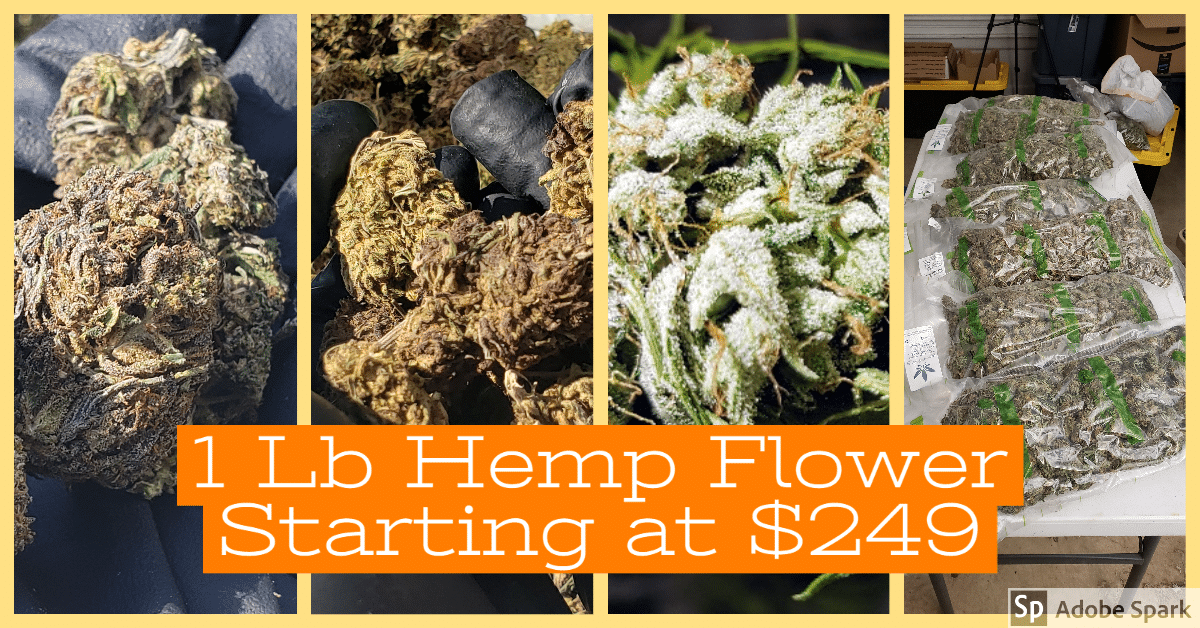 1 Lb Hemp Flower Cheap 249 Lb Fathers Day Special Father S Day Specials Best Farm Dogs Free Facebook Likes