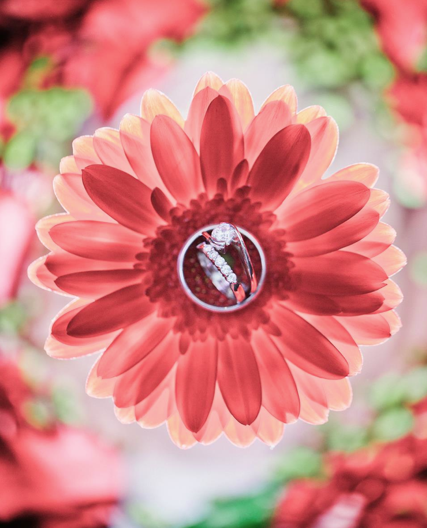 Amazing Ring Shot by James Day - my favorite flower!