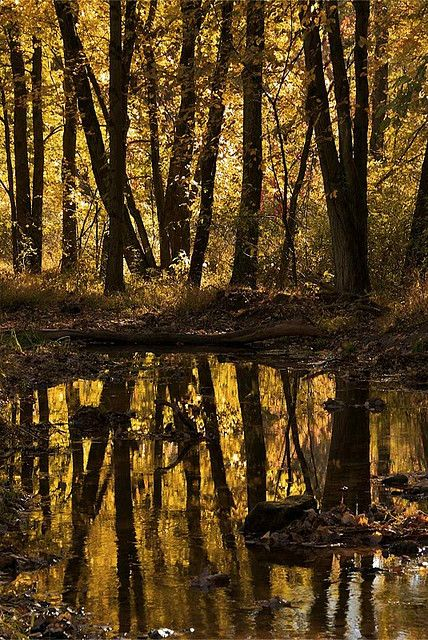 autumn reflection, Watchung Reservation, Union County, New Jersey