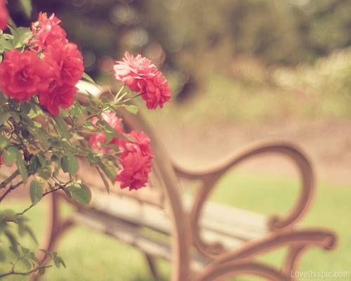 تلك الزاوية التي اتخذت منها الصورة هذا المقعد الفارغ الذي ينتظر أن تجلس عليه فتاة وحيدة تكتب في دفترها ك Flowers Photography Vintage Flowers Flower Girl Photos