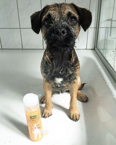 Produkttest Welpenshampoo Hunde Welpen Produkt
