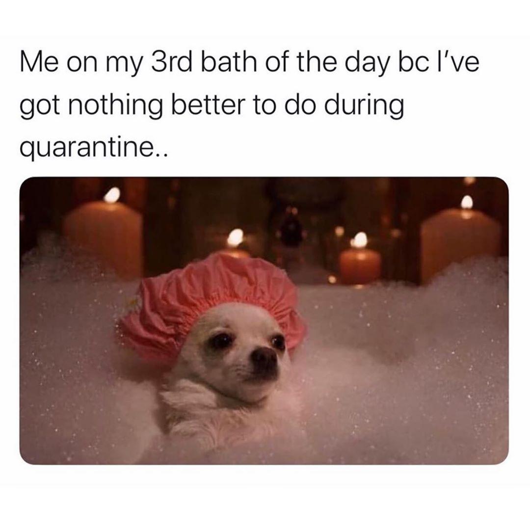 Soo Funny Funny Dog Memes Funny Animal Memes Funny Relatable Memes