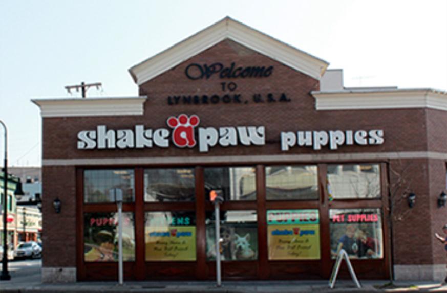 Current Availability Puppies For Sale Hicksville Ny Lynbrook Ny Nassau County Long Island Ny Shakeapaw L Puppies Bernese Mountain Dog Puppy Lynbrook