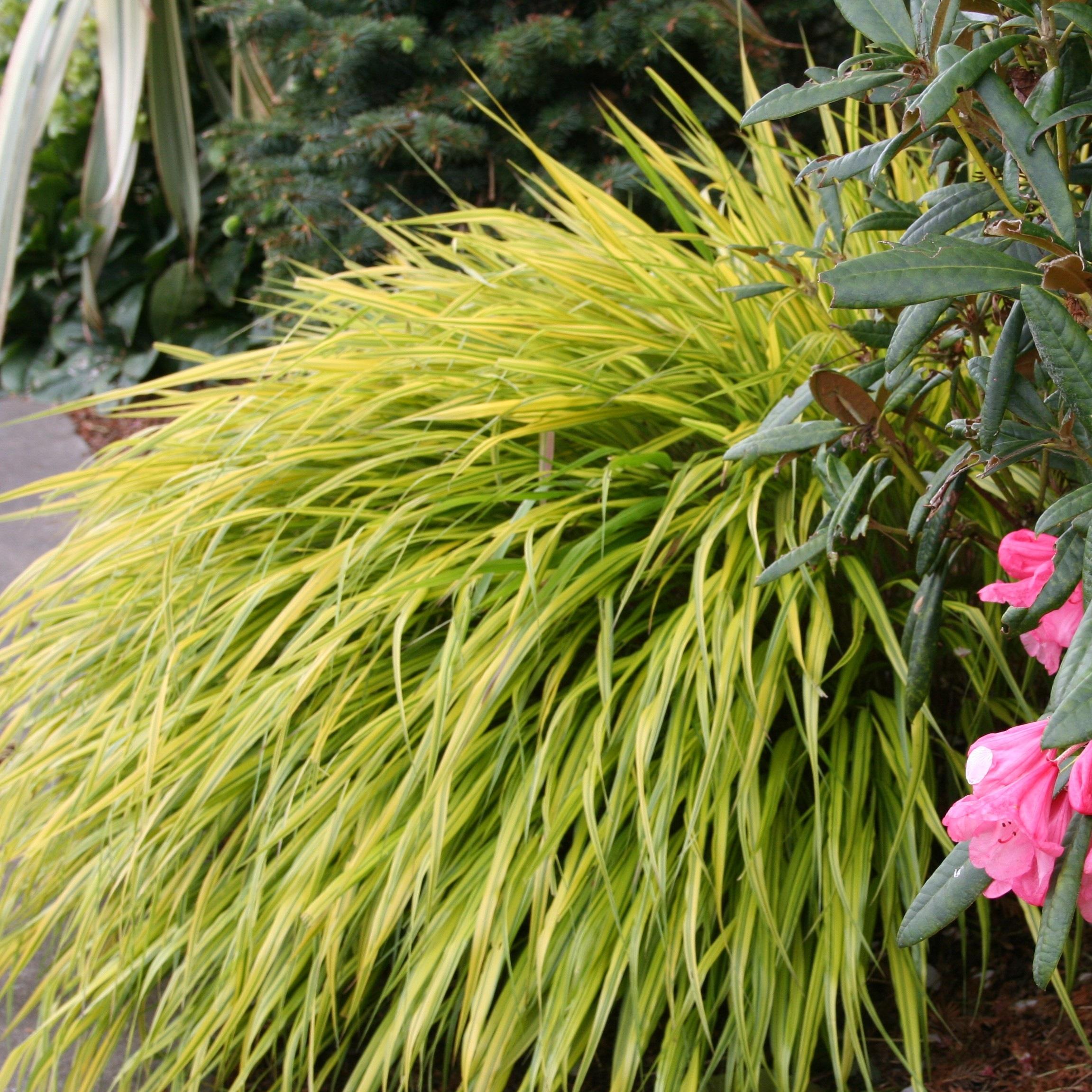 Coastal Gardening Shade Loving Plants For The Sea Coast North