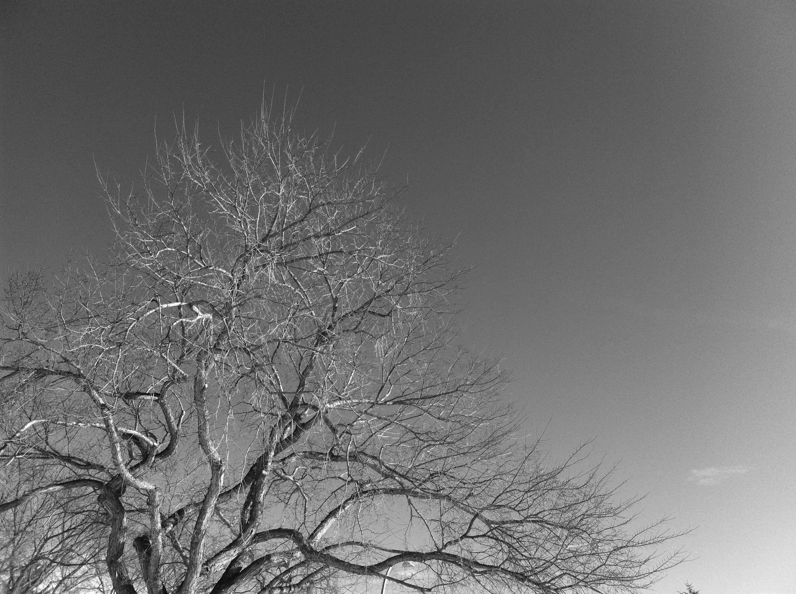 Hazeldean Sky