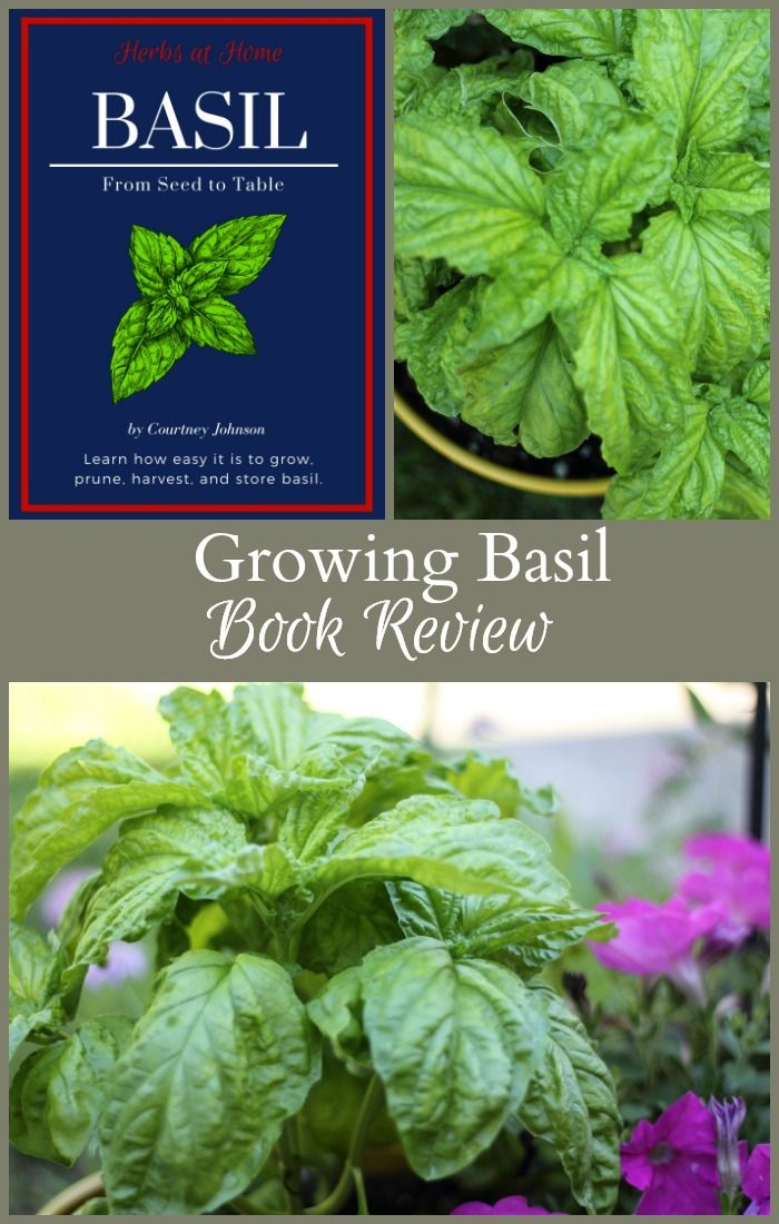 Growing Basil and More New Book Review and Giveaway