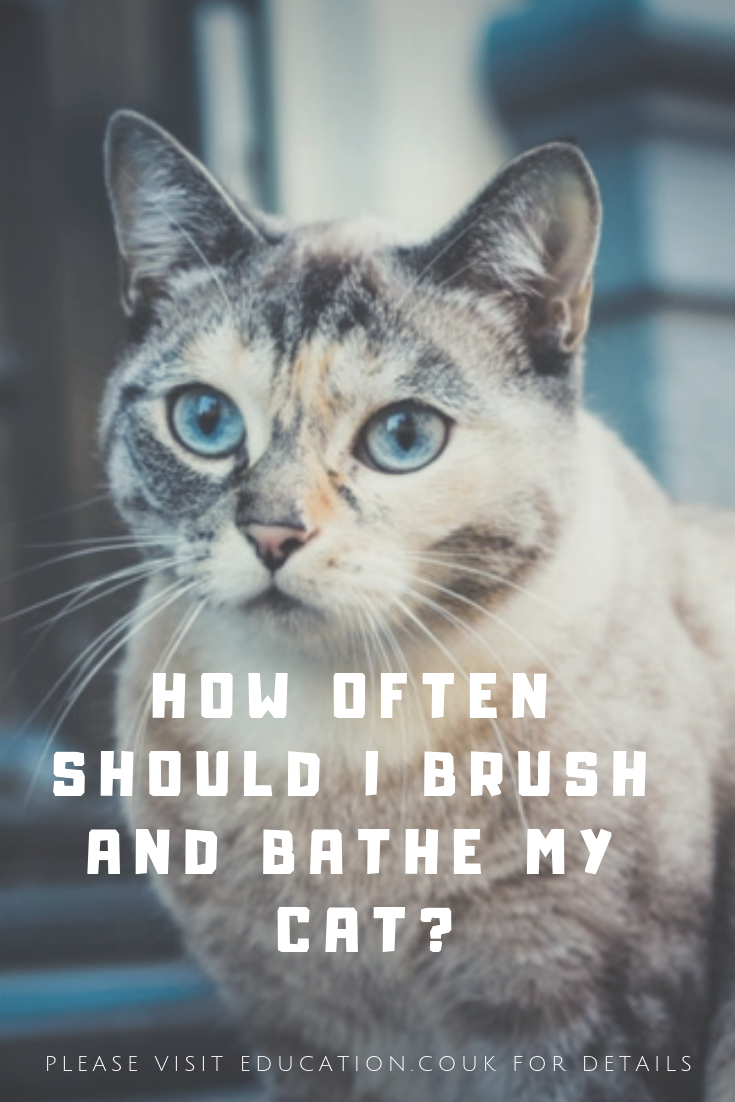 How often should I brush and bathe my cat? Cats, Funny
