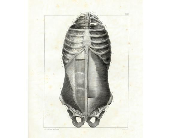 1844 Antique Anatomy Human body torso Muscles Human Body Large size Bourgery Medicine Medical Cabinet Doctor Wall Art 18f6557e397df177a1edbfeed00116bd