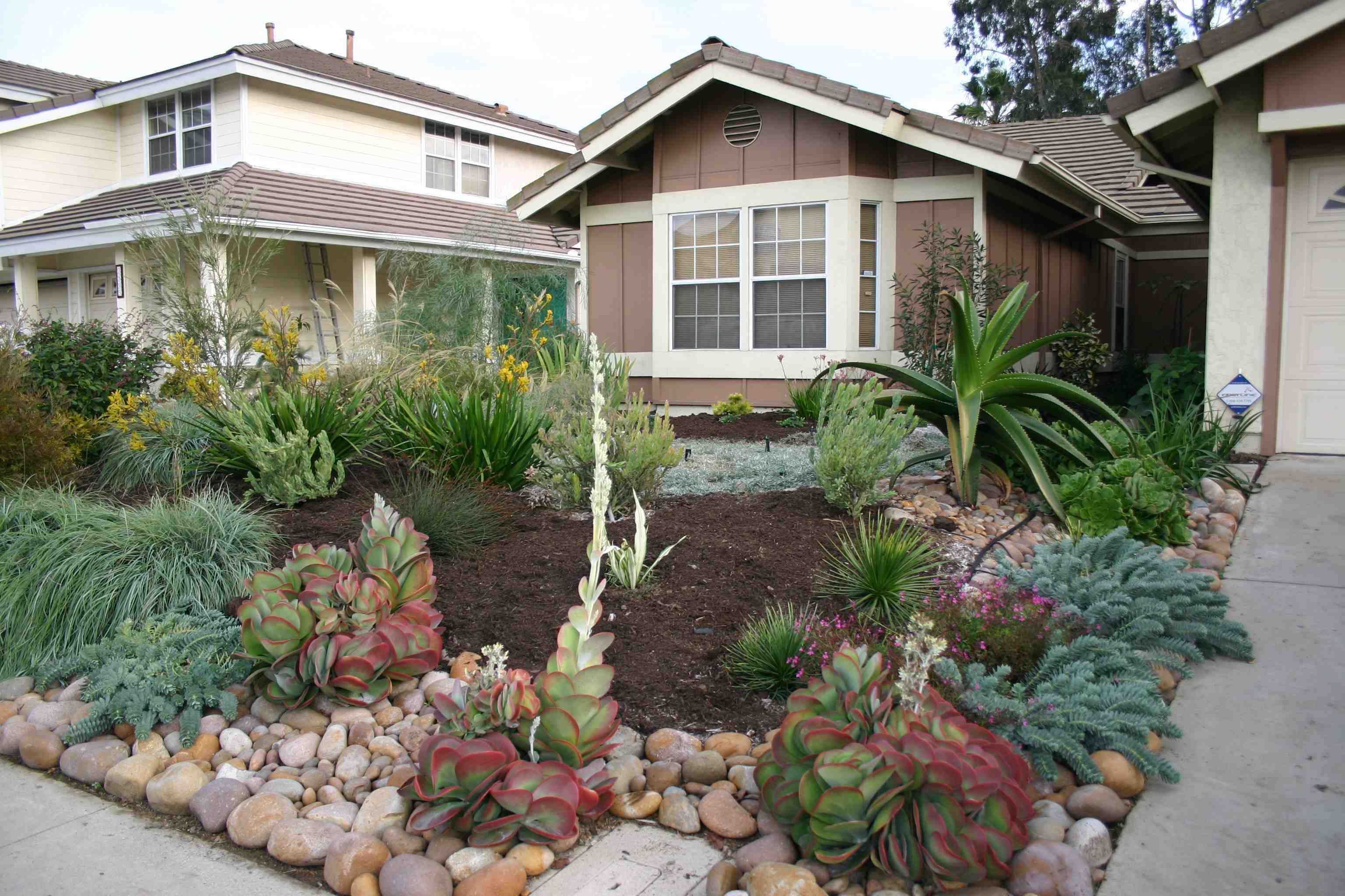 California drought resistant landscaping ideas drought for Ideas for front yard plants