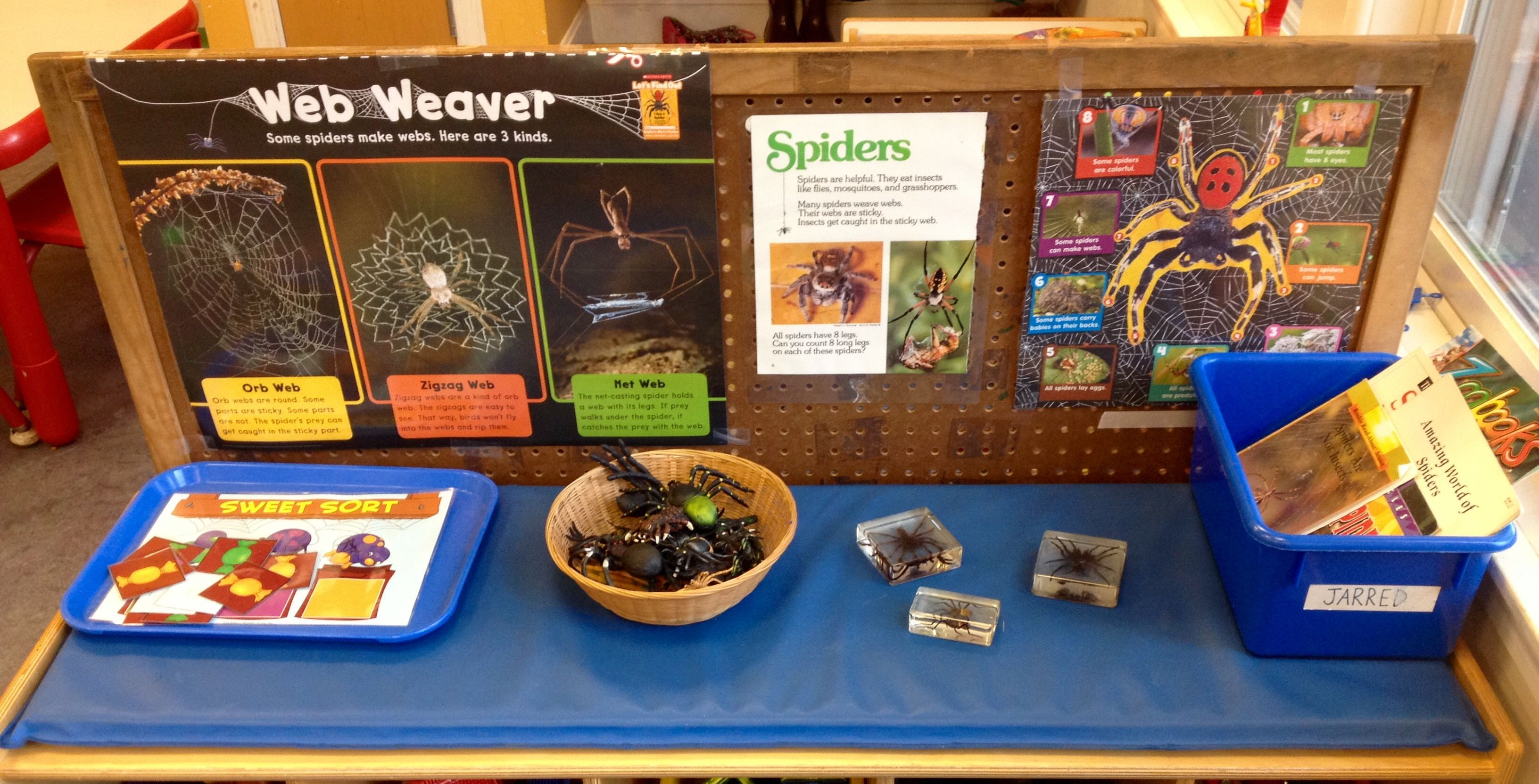 Preschool Spider Exploration