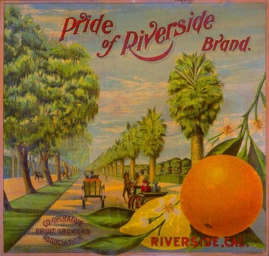 Riverside Pride of Orange Citrus Crate Label Art Print | eBay