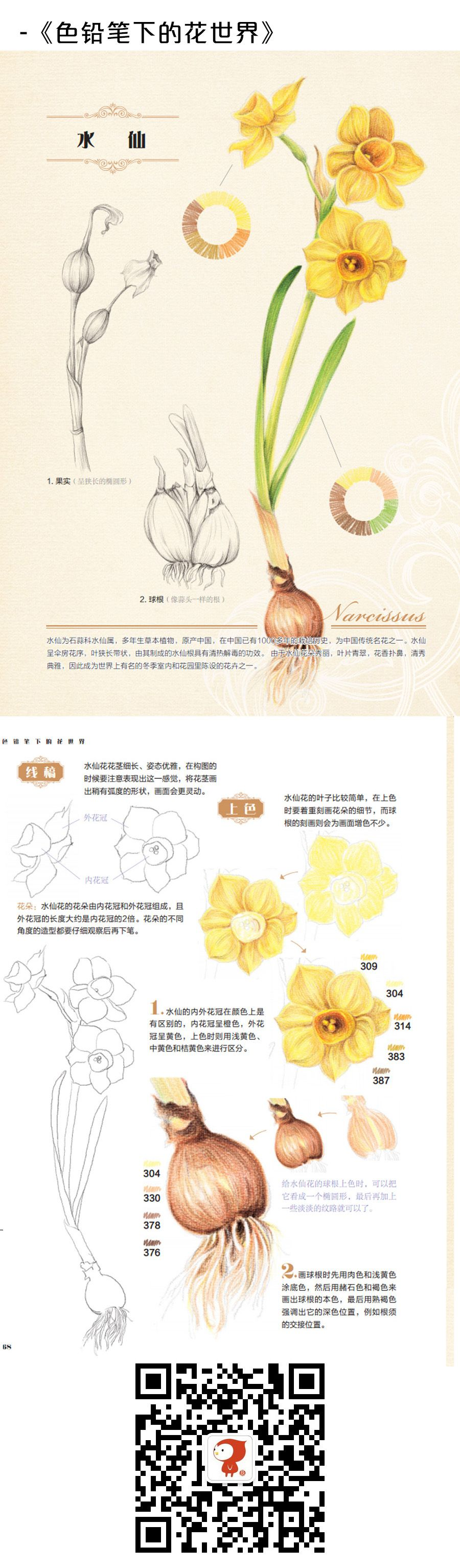 Duitang 飞乐鸟水仙 draw step by step pinterest colored