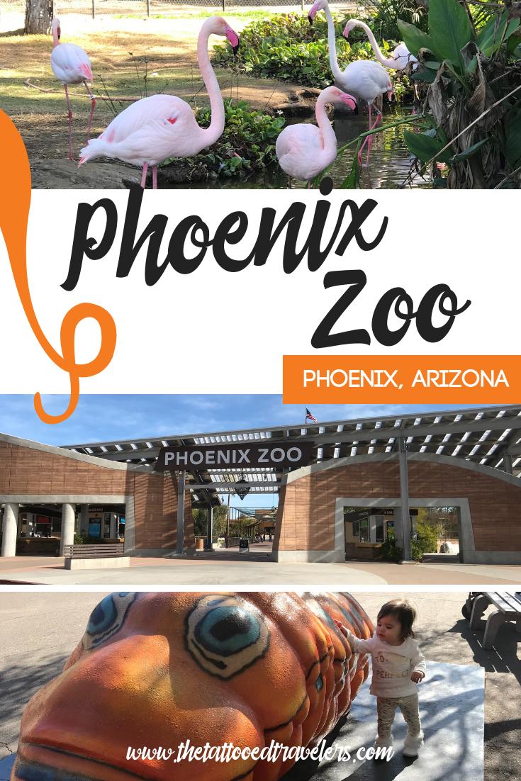 pretty nice 3b213 9b569 Phoenix Zoo | Arizona // USA | Arizona travel, Arizona ...