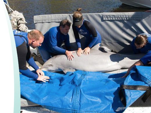 SeaWorld to help your children or students make the most of all SeaWorld has to offer