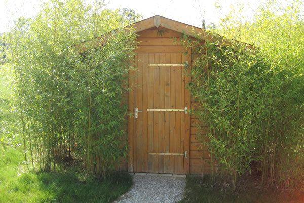 Aménagement du jardin : la haie de bambous, un écran végétal | Haie ...