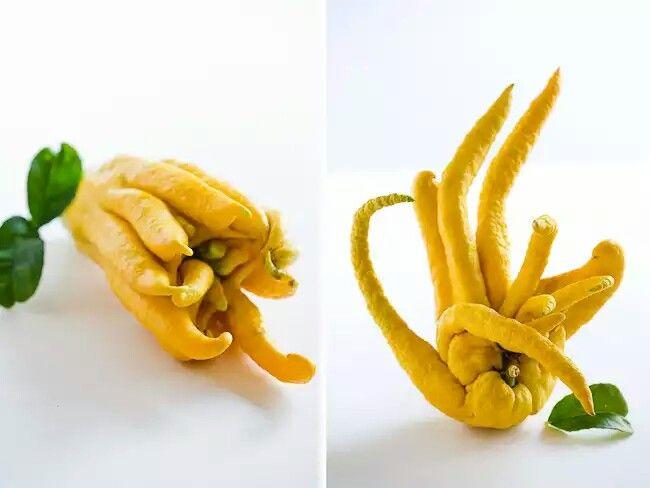 Mano de Buda Es una fruta dulce y fragante, por lo que se suele utilizar para aromatizar ambientes.