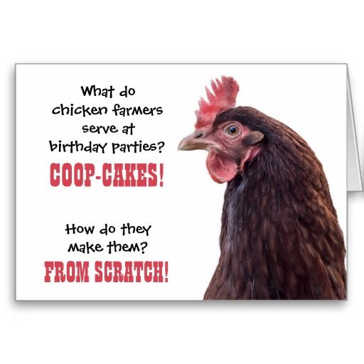 Birthday Chicken Jokes With Hen Photo Card Zazzle Com Chicken Jokes Happy Birthday Chicken Funny Birthday Cards