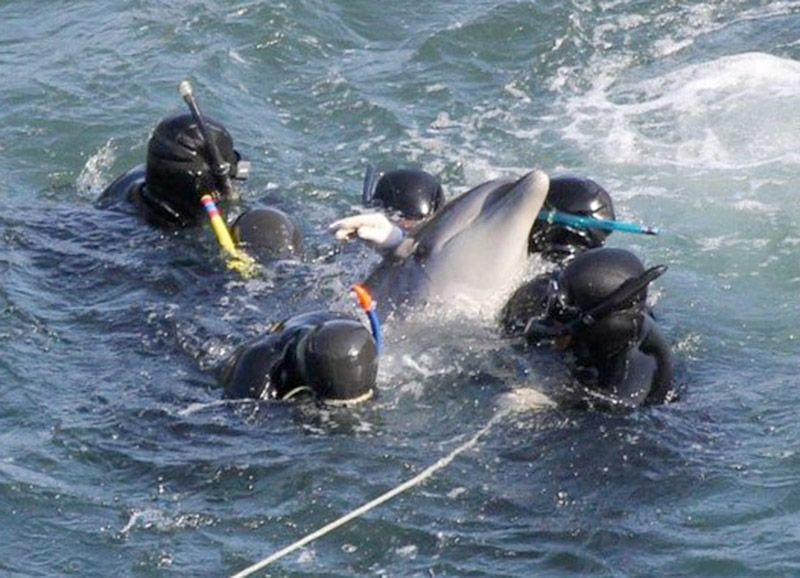 Why Don't Dolphins And Whales Fight Back? Op Ed Save