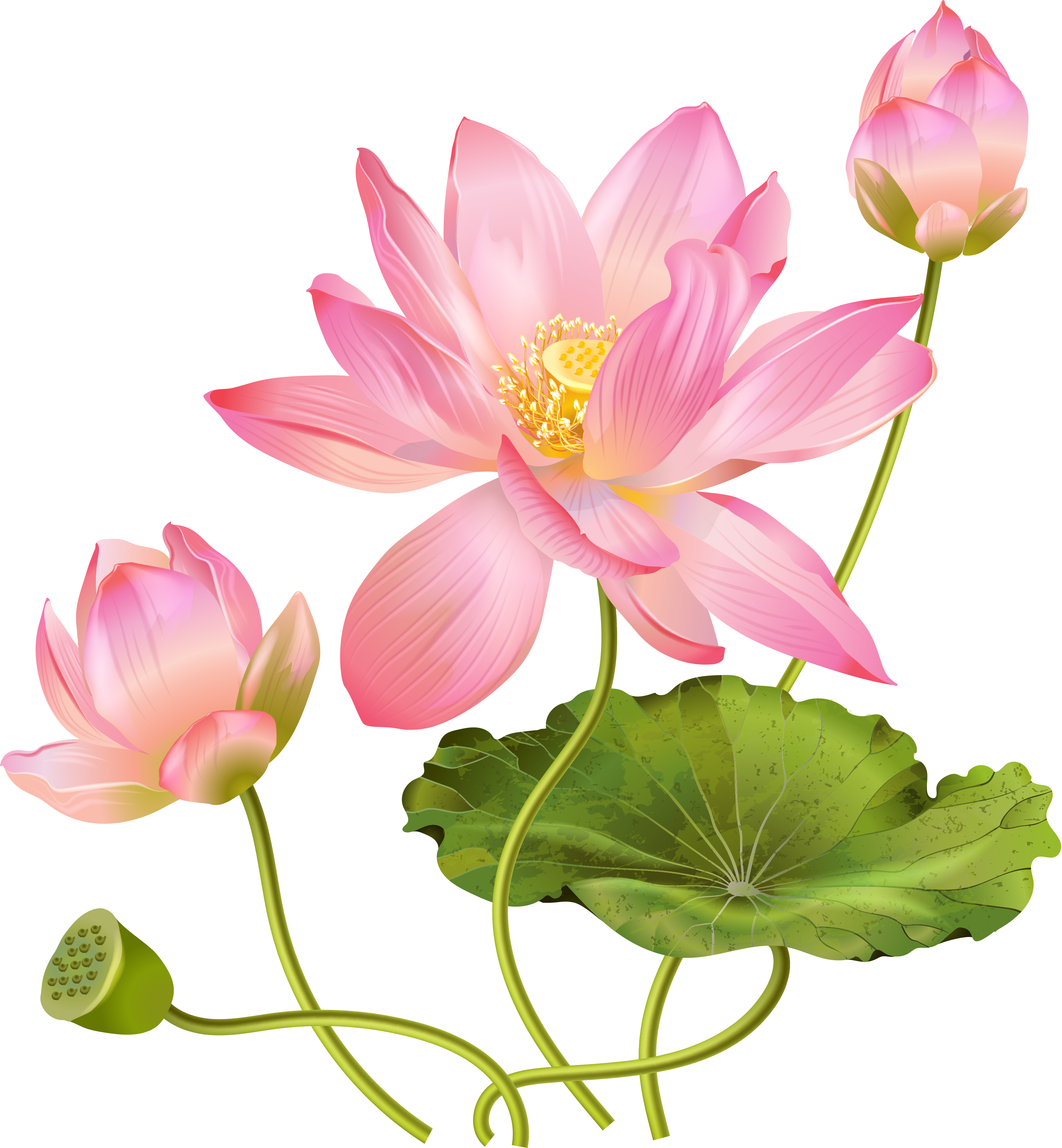 0_1abb2a_a5c0164e_orig (3698×3999) Ботанические принты