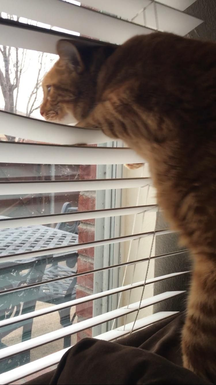 My cat seeing another cat for the first time when a stray ...