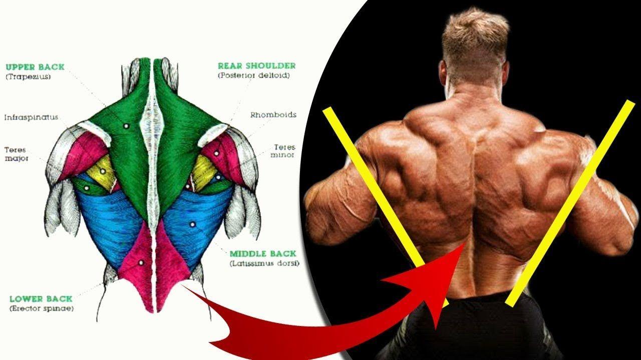 New Video By مهووس عضلات كمال الاجسام On Youtube يعتبر الظهر من العضلات الأساسية في جسم الإنسان فتقويته تساعد العمود الفقري على تحمل الضغوطا Ejercicios Anatomia