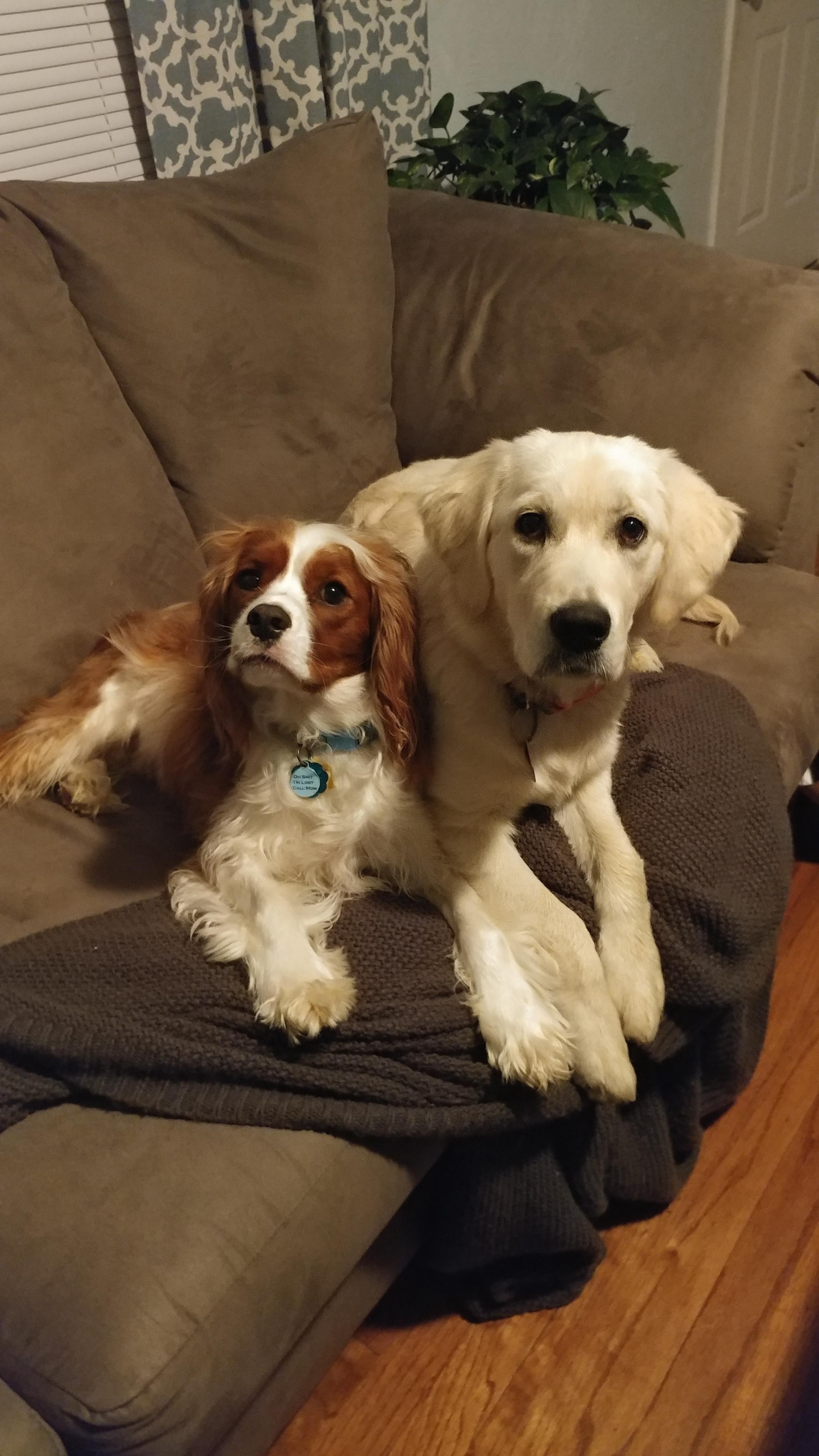 Ella is getting bigger than her big brother! http://ift.tt/2pbue8A