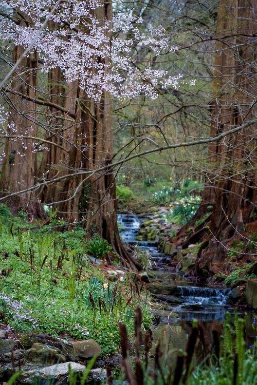 dream brother, soul sister (nature,stream,creek,blossoms)