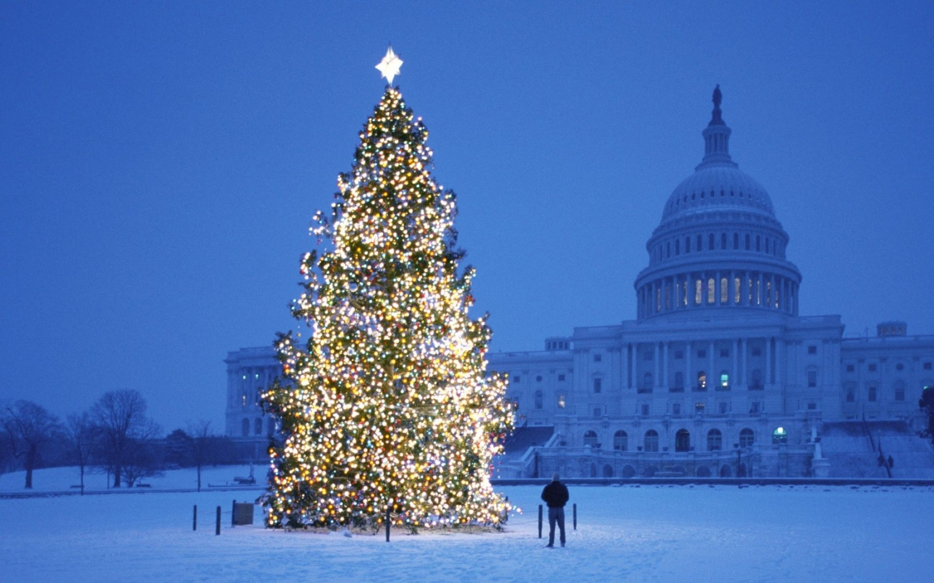 Christmas Tree In Front Of The Us Capitol Washington Dc Wallpaper