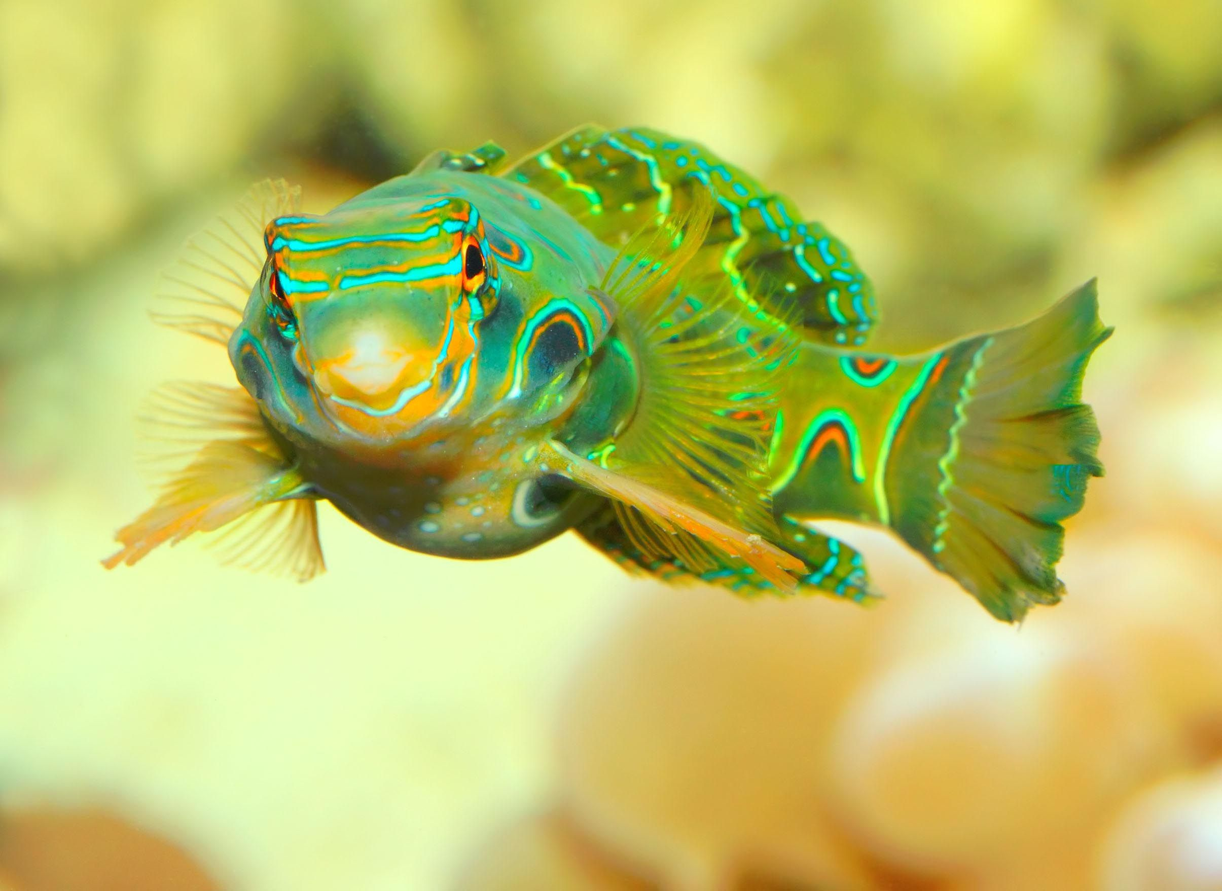 Exotic saltwater fish for aquariums aquarium fish for Exotic tropical fish